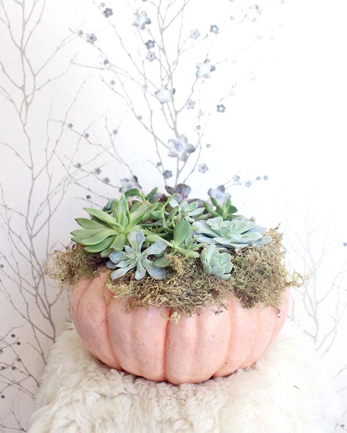 Succulent Cinderella Pumpkin - The Blog Societies